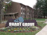 shadygrove small
